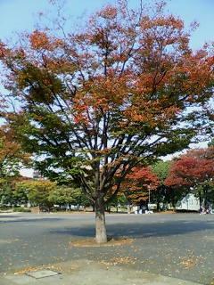 反町公園の紅葉