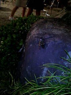 岩に染み入る……