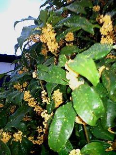 秋の芳香剤