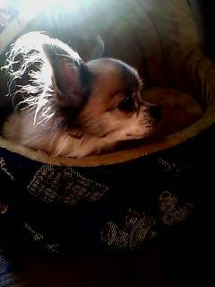 叔父母夫妻の愛犬『夏子』