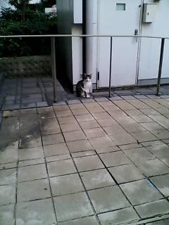 なんてお行儀のよい子猫ちゃん