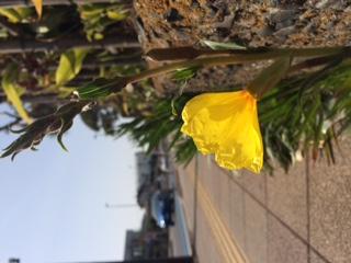 やっぱり、春の花は黄色いね
