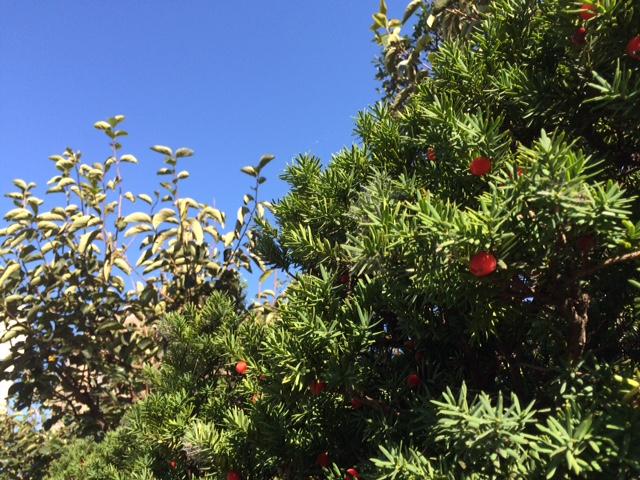 生垣の赤い花。木の名前を知りません。