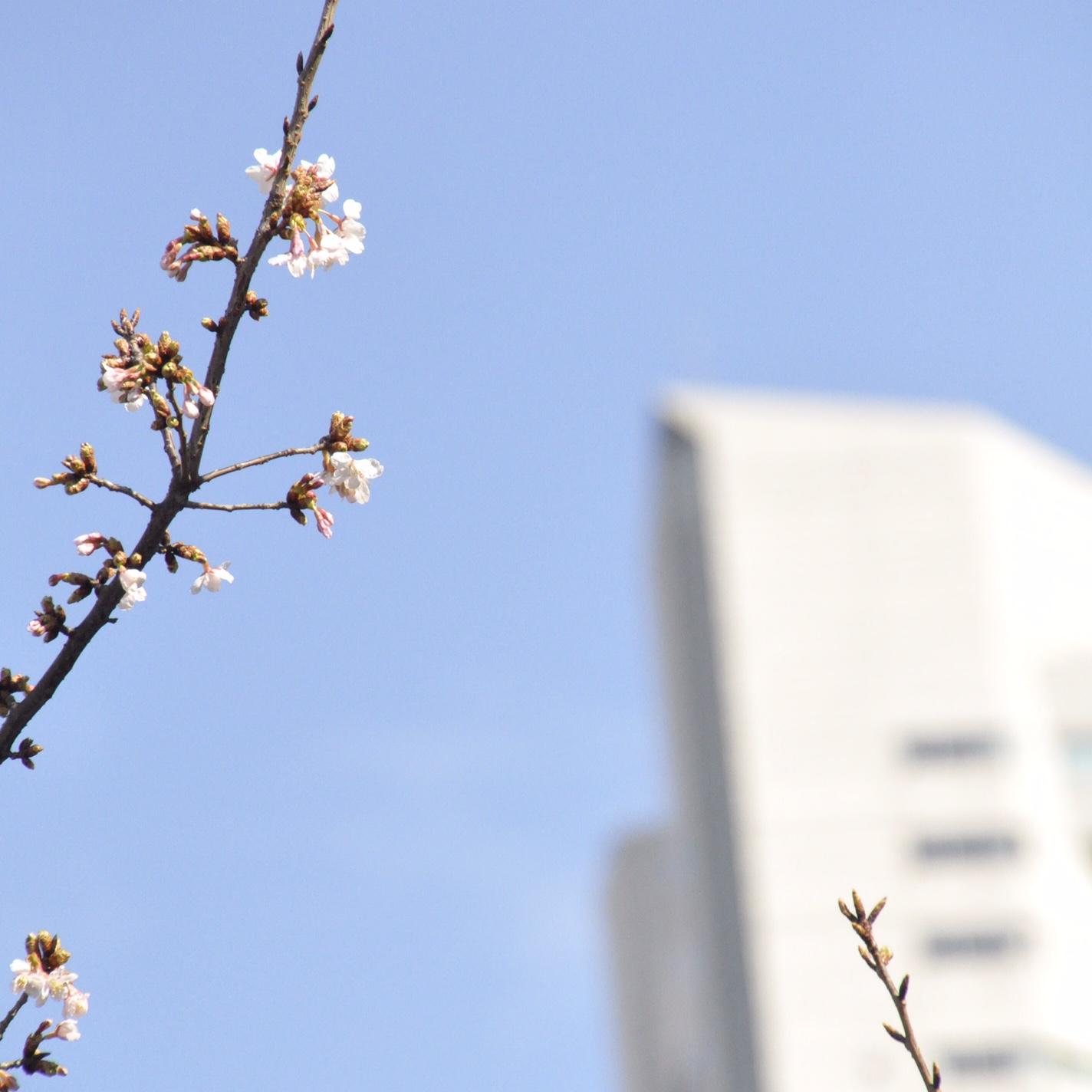 ヨコハマの春
