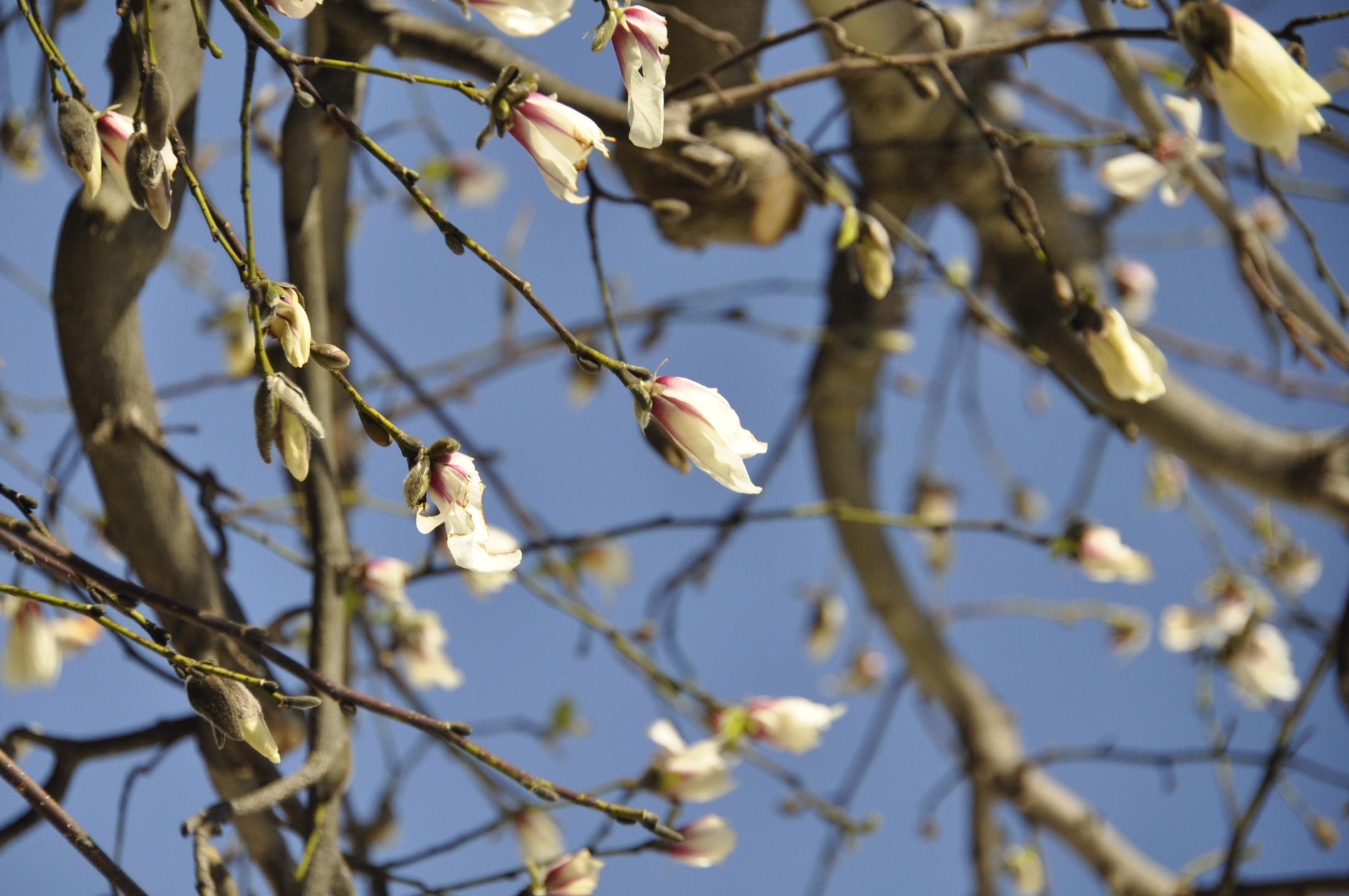 春は目の前